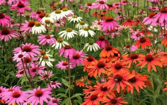 Antibiotici naturali: 3 rimedi vegetali senza effetti collaterali