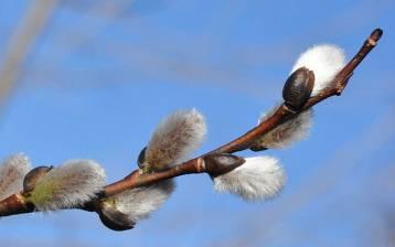 Quando Salute e Bellezza vengono dalle piante, le nostre radici che ci connettono alla terra