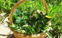 Le erbe spontanee: un pieno di vitamine, sali minerali e antiossidanti