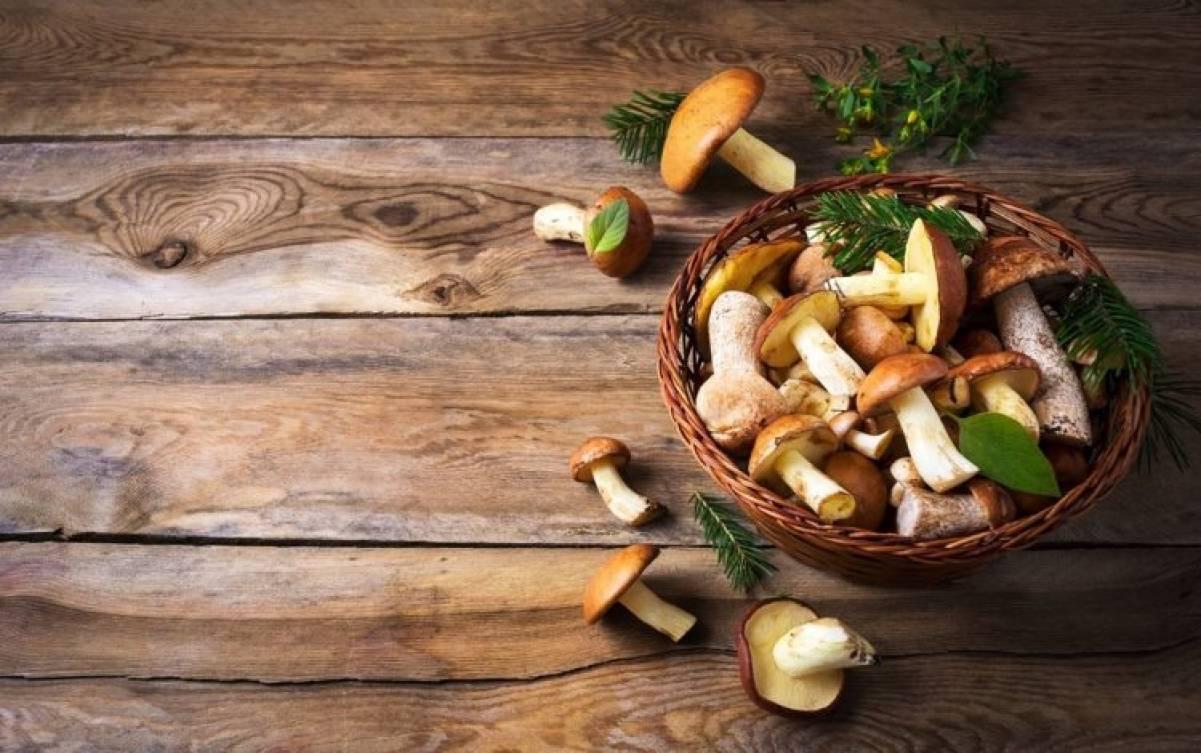 Introduzione ai Funghi nella dieta