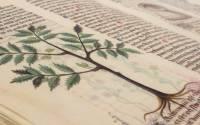 Il Giardino dei Semplici: il fiore dell'arte del sanare