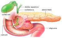 Anatomia della Vescica Biliare