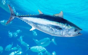 Come il selenio presente nel pesce può rendere innocuo il mercurio