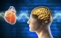 Nervo vago: un accesso strategico al benessere