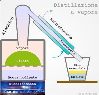 Distillazione a vapore olii essenziali