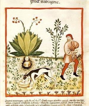 Erborari antichi