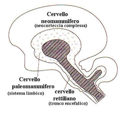 cervello neomammifero