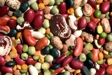 Le proteine vegetali i legumi